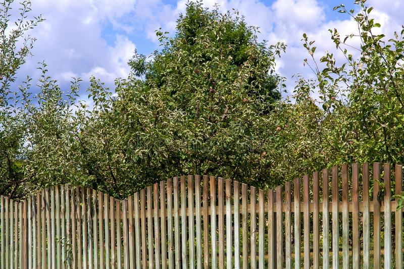 The apple orchard is fenced from wooden boards. The apple orchard is fenced from wooden boards, a sunny summer day with a blue sky and clouds stock image