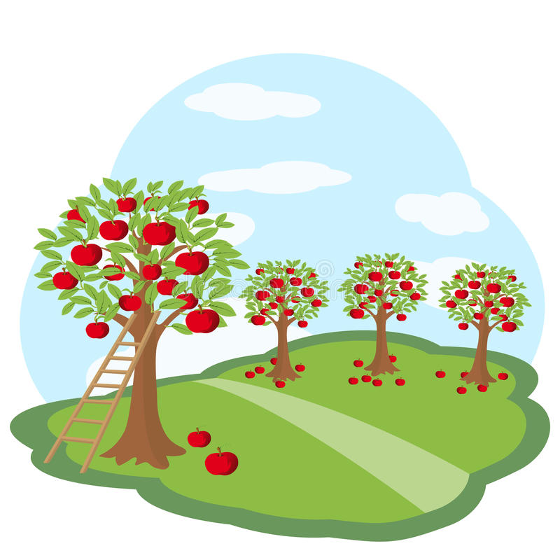Apple orchard with harvest on green meadow vector illustration