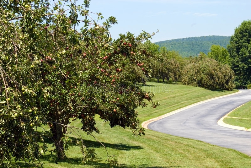 Apple Orchard/Landscape royalty free stock photography