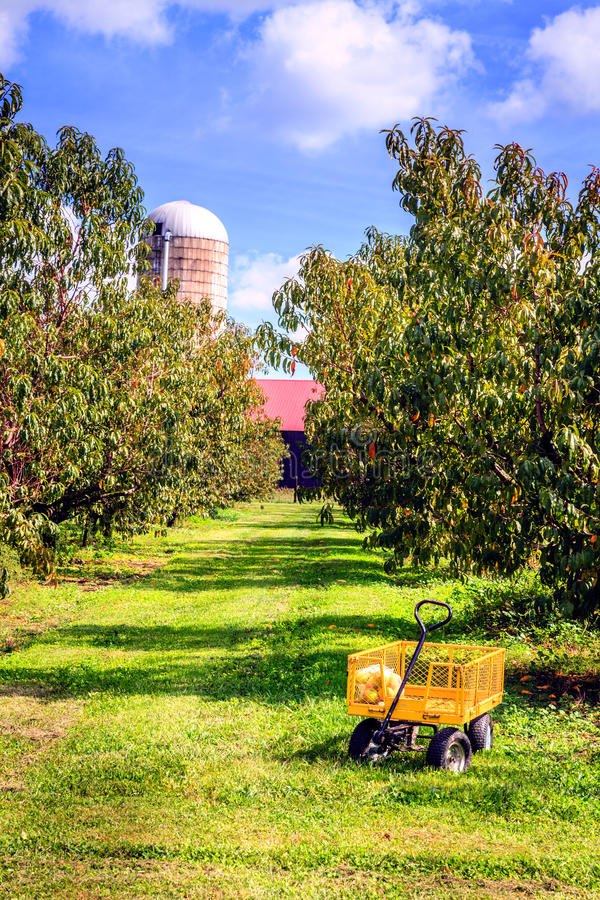 Download Apple orchard stock photo. Image of perspective, cart - 42087608