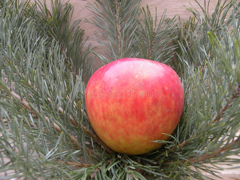 Apple pålagda granfilialer arkivbild