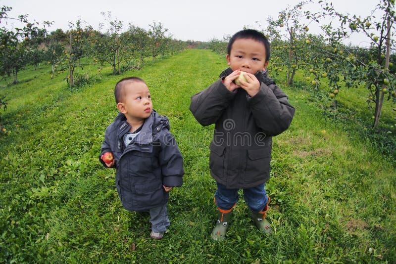 Apple Picking stock photo