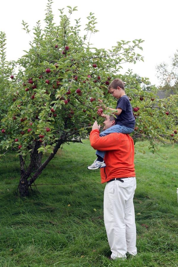 Download Apple Picking On Dad's Shoulders Stock Image - Image: 18696425