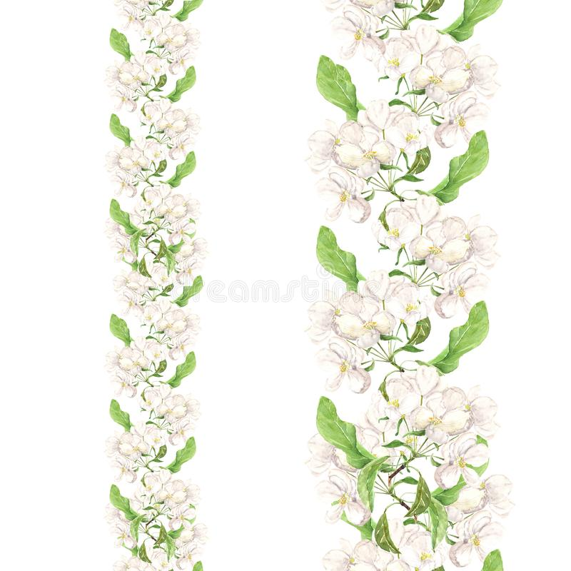 Apple pink flowers. Seamless floral border. Botanical watercolour painted edging vector illustration