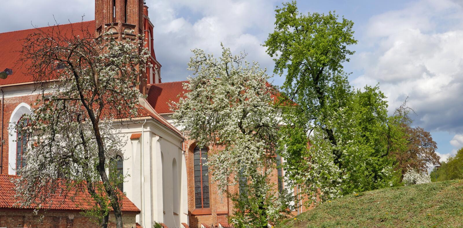 Apple and plum trees bloom in spring near the old catholic church of St. Anne in Vilnius royalty free stock images