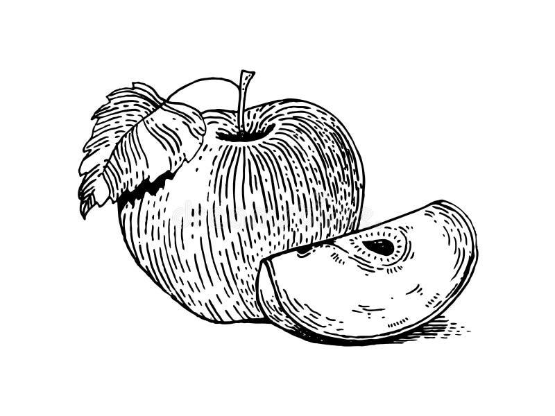Apple portent des fruits illustration de vecteur de style de gravure illustration stock