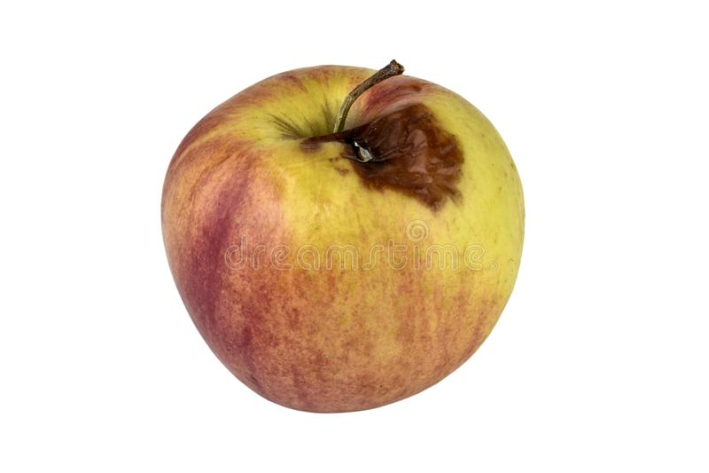 Apple putrefacto aislado en el fondo blanco foto de archivo
