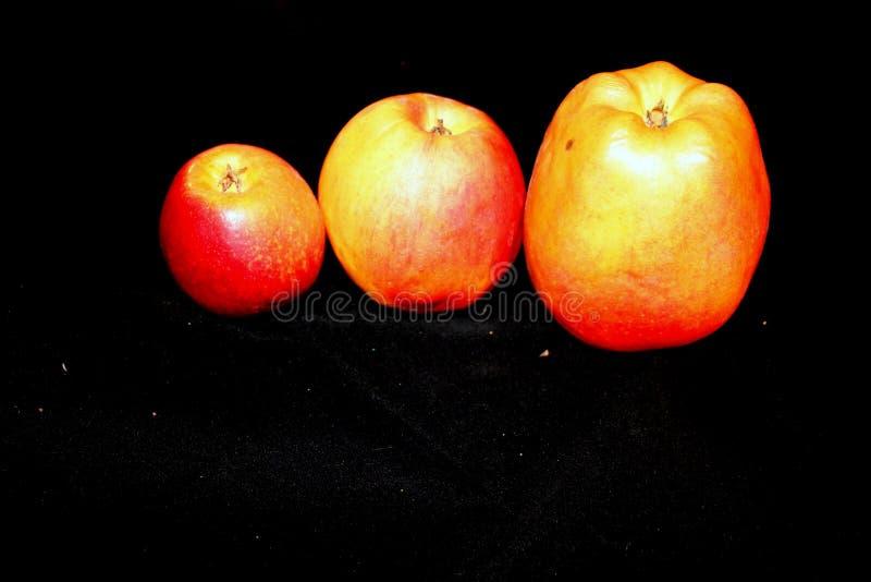 Apple rosso su fondo nero immagini stock