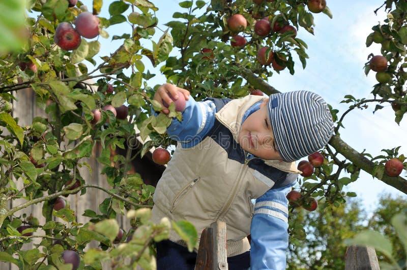 Apple-Sammeln stockfotos