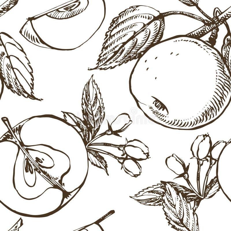 Apple sboccia ramo isolato su bianco Illustrazione disegnata a mano botanica d'annata Fiori della primavera di di melo illustrazione vettoriale