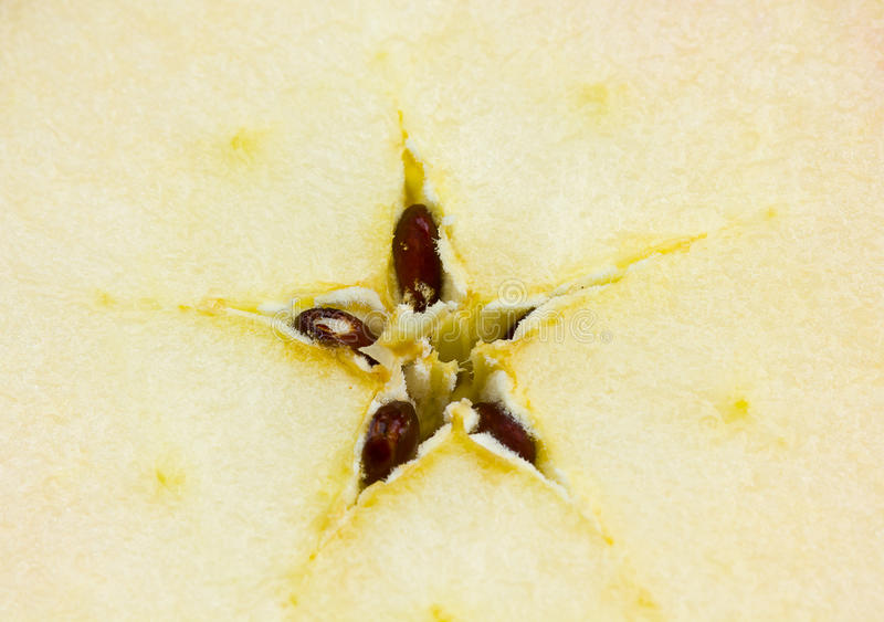 Download An apple with seed stock photo. Image of nature, vitamin - 21733956