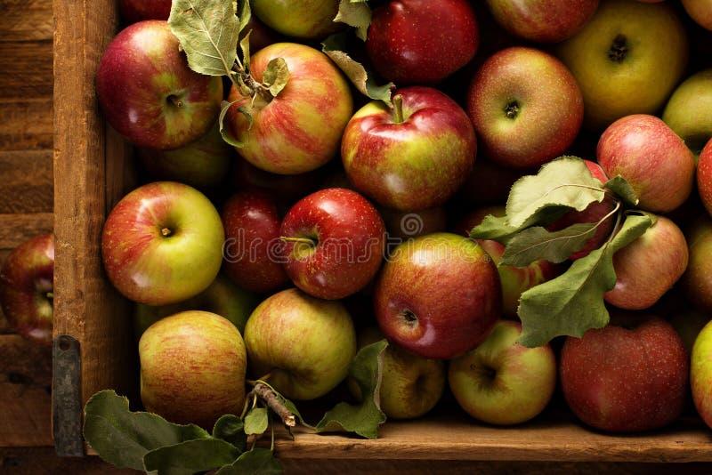 Apple skörd i en träspjällåda arkivfoton