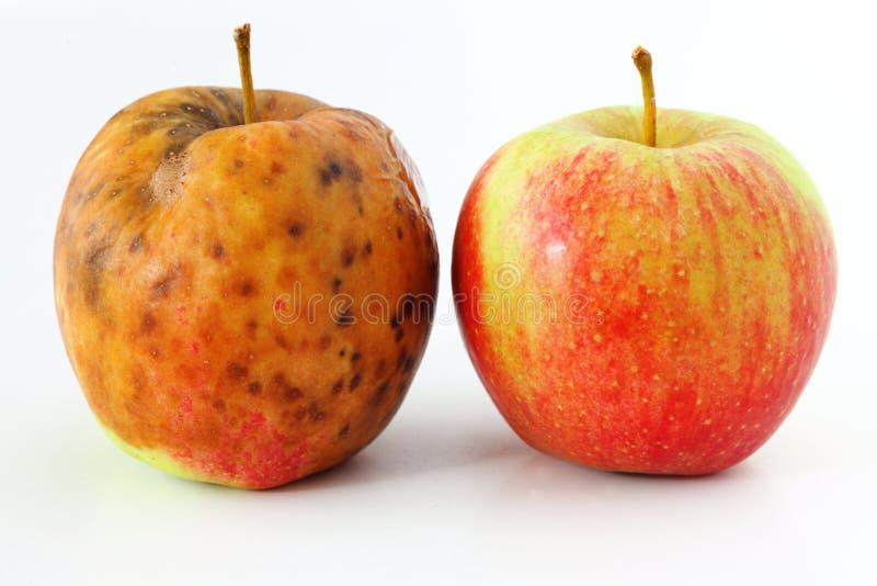Apple spolierade på vita sunda och ruttna äpplen för bakgrund arkivfoto