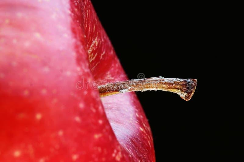 Apple-Stamm lizenzfreies stockbild