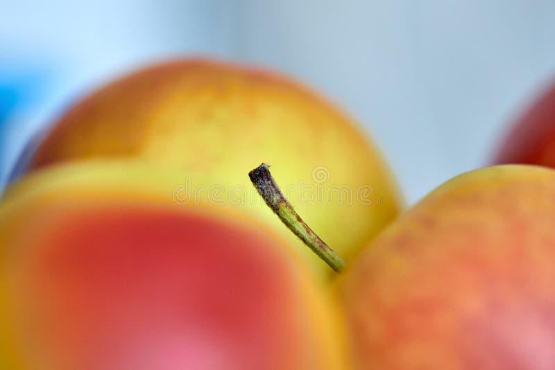 Apple-Stiel Makro Apple-Stielmakrofoto stockbilder