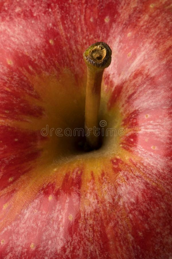 Apple-Stielabschluß oben stockfoto