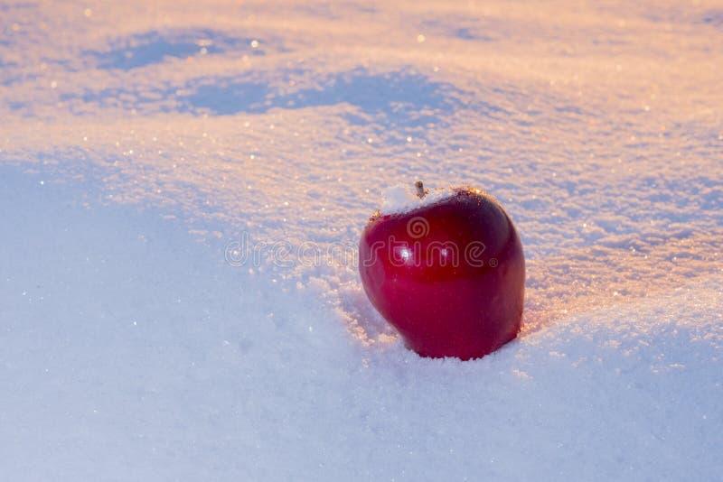 Apple sur la neige photo libre de droits