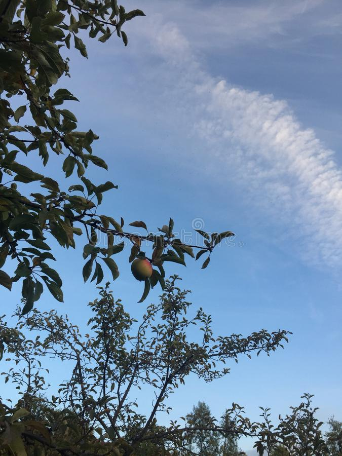 Apple in the sky royalty free stock photography