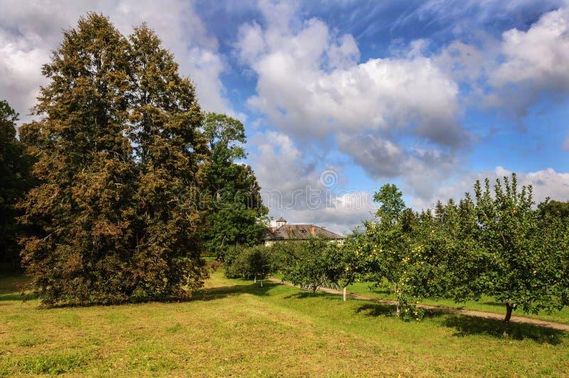Apple träd parkerar in royaltyfria foton