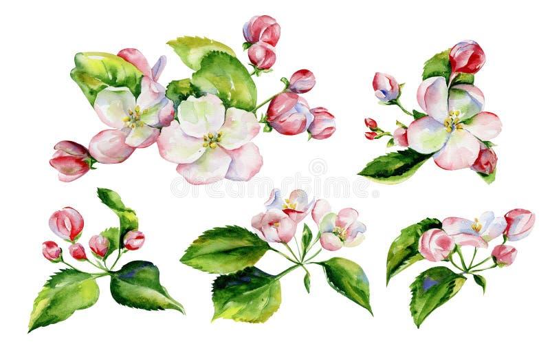 Apple trädfilialer och sömlös modell för blommor vektor illustrationer