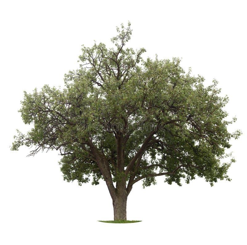 Free Apple Tree Stock Photos - 10022733
