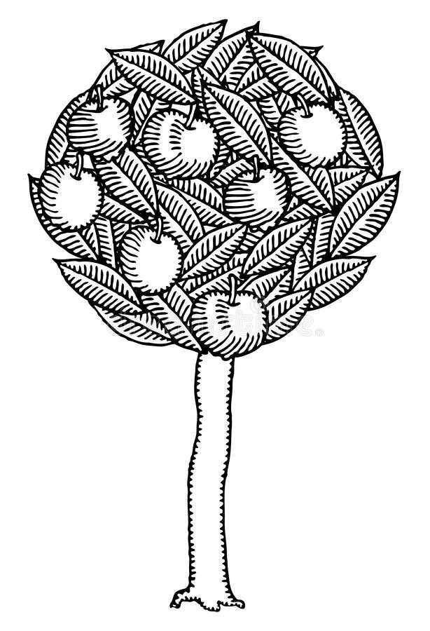 Apple tree black and white engraved stock illustration