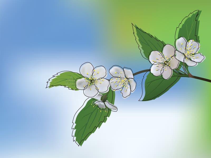 Apple tree in bloom stock illustration