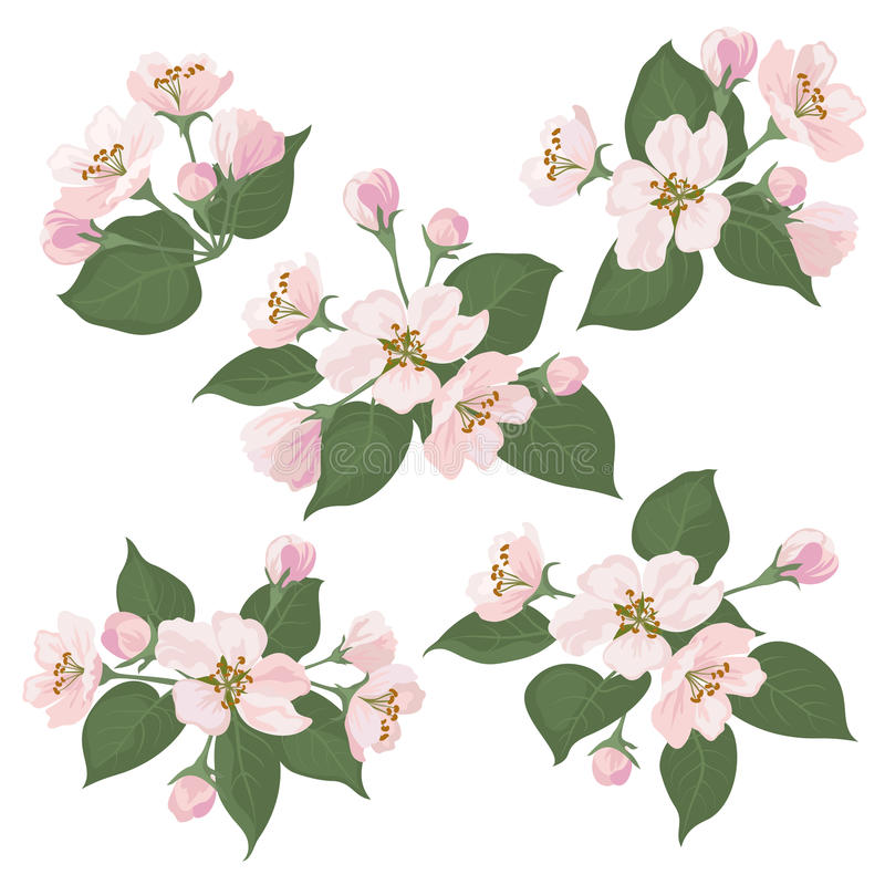 Apple Tree Flowers And Green Leaves Set Stock Vector
