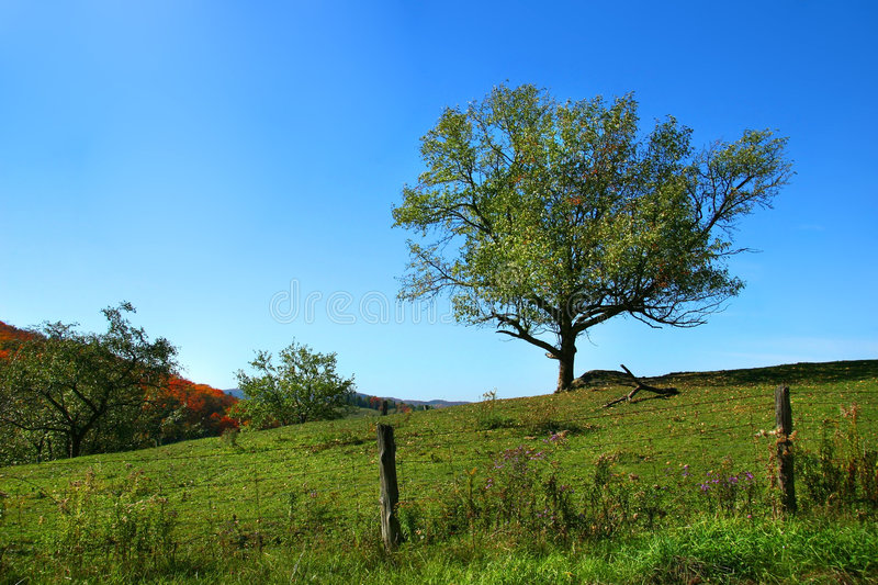 Apple tree on the hill. With blue sky royalty free stock photography