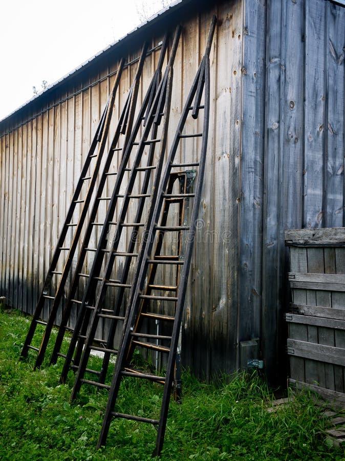 Apple Tree Ladders stock image
