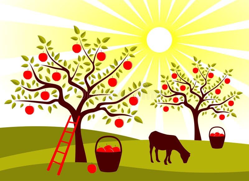 Apple tree orchard stock illustration