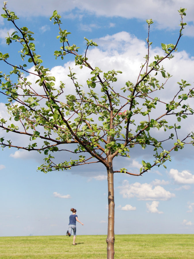 Apple tree with running girl royalty free stock photos