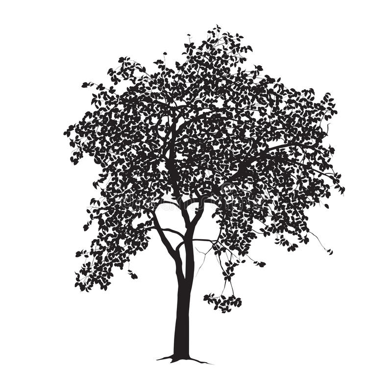 Apple-tree silhouette on a white background stock photo