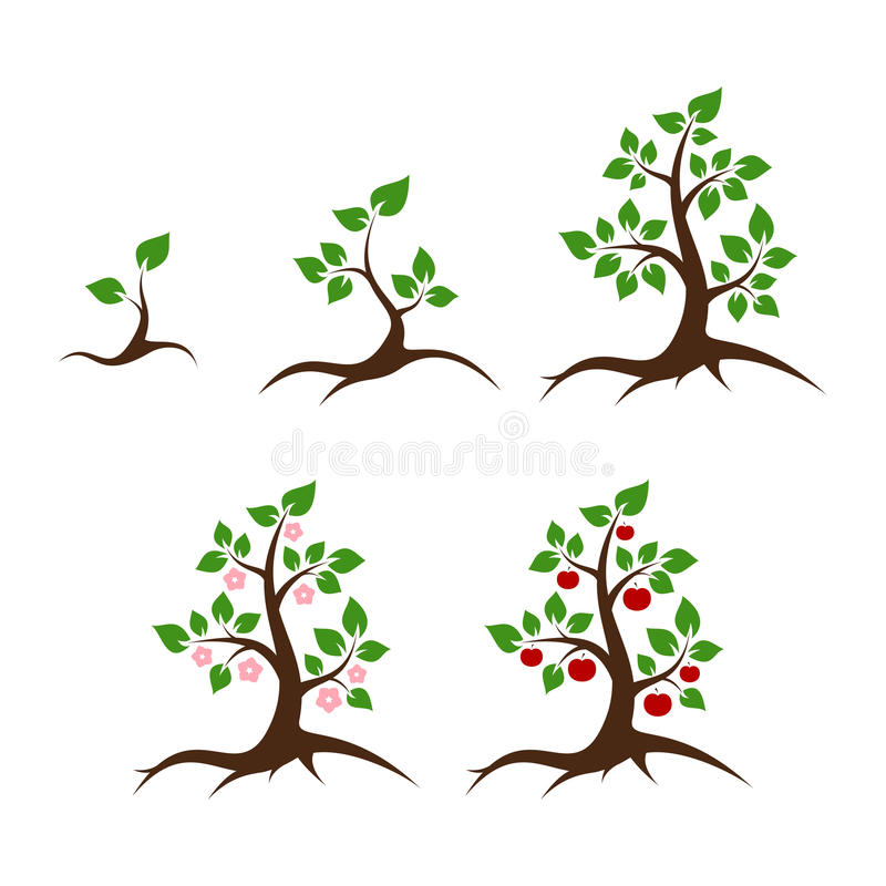 Apple tree vector illustration. Shoot, young plant, big tree, flowers and apples stock illustration