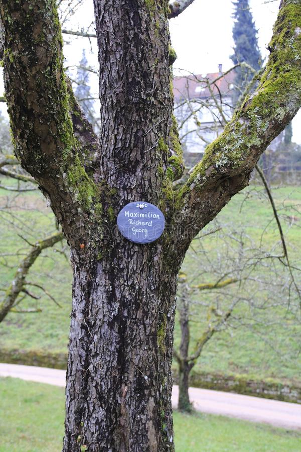 Apple tree, yellow Boskop with nameplate in winter, in the public fruit property Park Baden-Baden royalty free stock photo