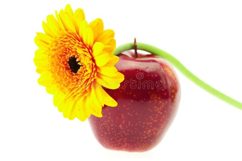 Apple und eine Blume lizenzfreie stockfotos
