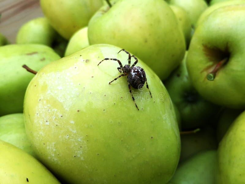 Apple und Spinne stockfotos