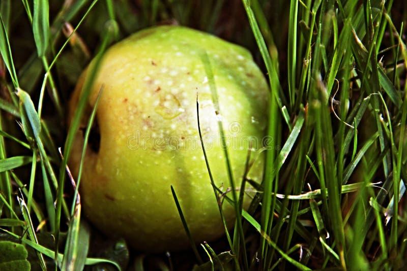 Apple verde en hierba verde mojada fotos de archivo