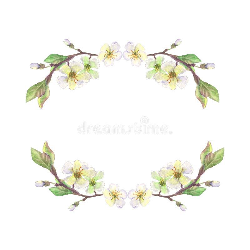 Apple vit blomningkrans royaltyfri illustrationer