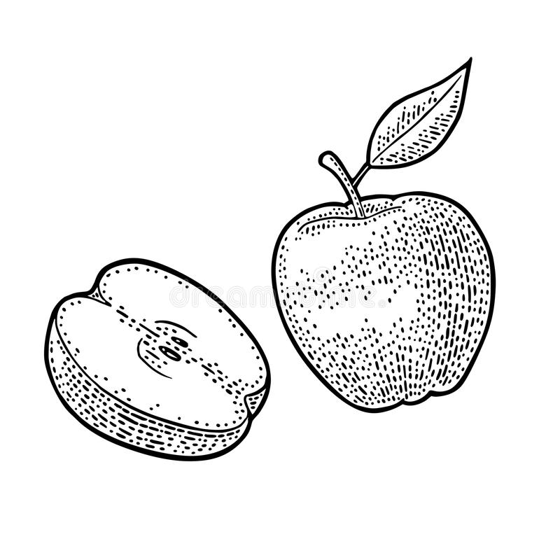 Apple whole and half with leaf. Vintage black engraving vector illustration