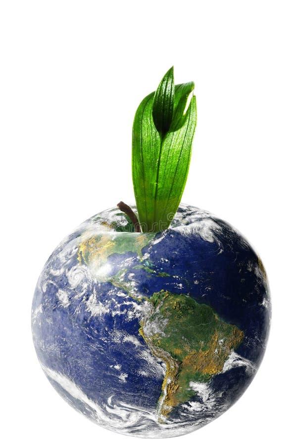 Apple ziemia odizolowywająca na bielu zdjęcie royalty free