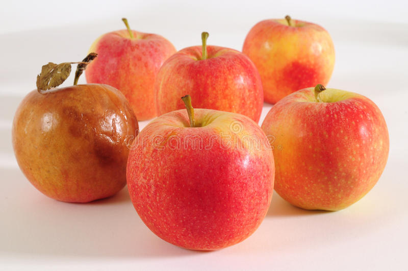 Apples. Fresh and one bad apple royalty free stock photography