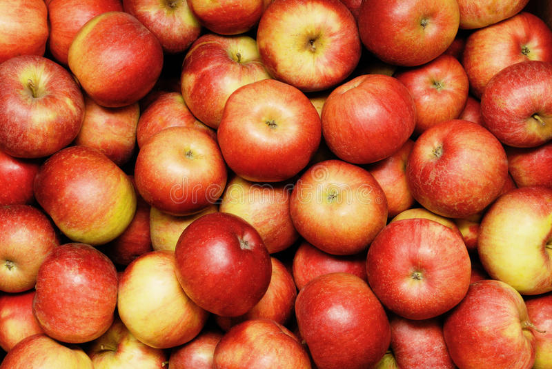 Download Apples stock photo. Image of food, ingredient, shiny - 23623364