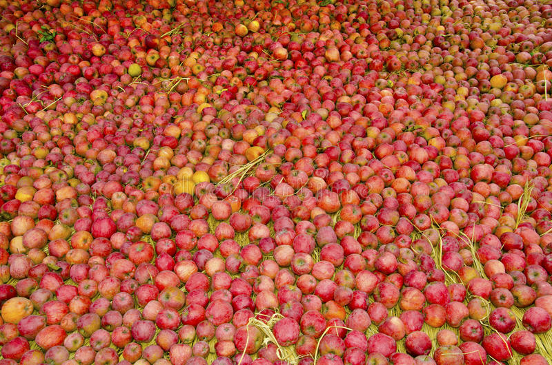 Download Apples stock image. Image of india, yellow, indian, fruit - 27802379