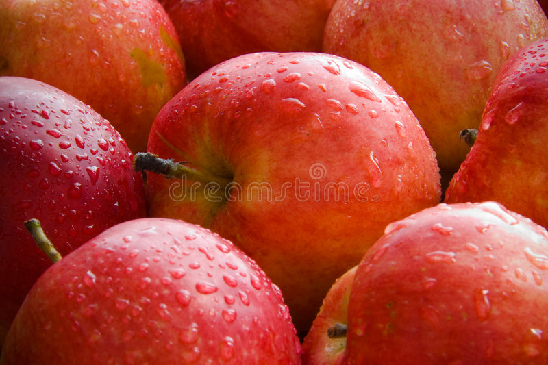 Download Apples stock image. Image of nutrition, freshness, nature - 3382409