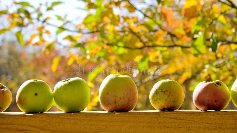 Download Apples. stock image. Image of nutrition, freshness, harvest - 4379805