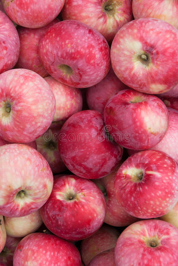 Apples_5 fotografering för bildbyråer