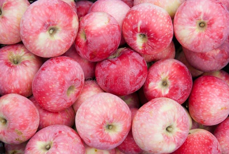 Apples_4 arkivbild