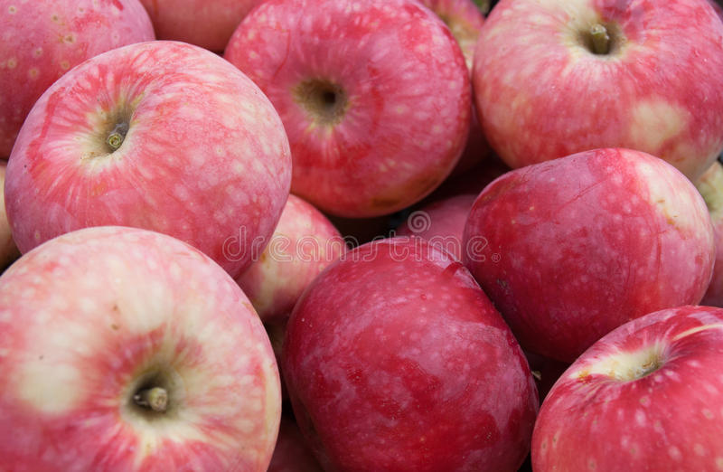 Apples_3 arkivfoton