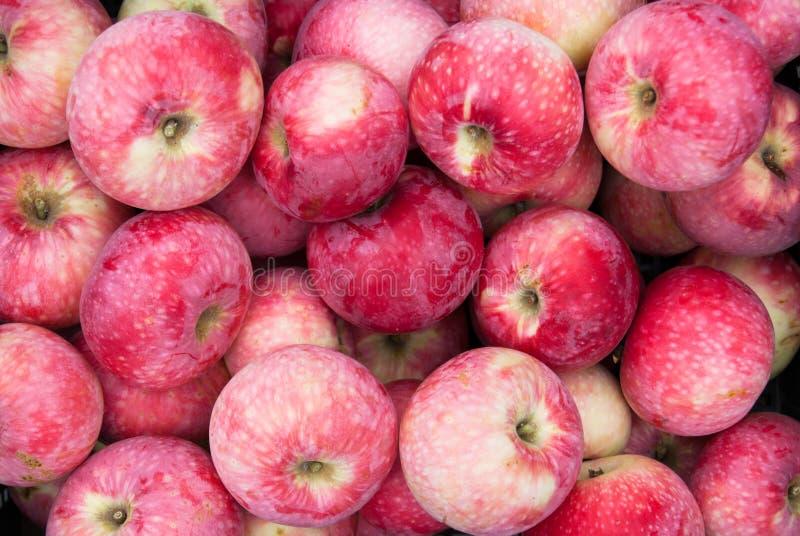 Apples_2 arkivbild